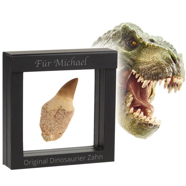 Den ca. 80 Millionen Jahre alten original Dinosaurier-Zahn präsentieren wir in einem tollen Schweberahmen, der auf Wunsch graviert werden kann.